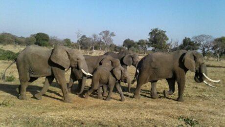 Destination-Livingstone-cover-conservation
